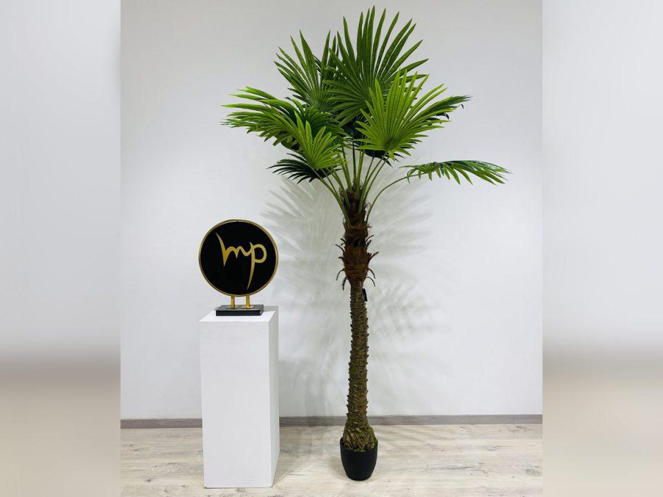 Plante_19
