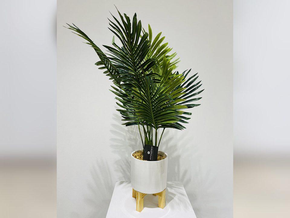 Plante_28