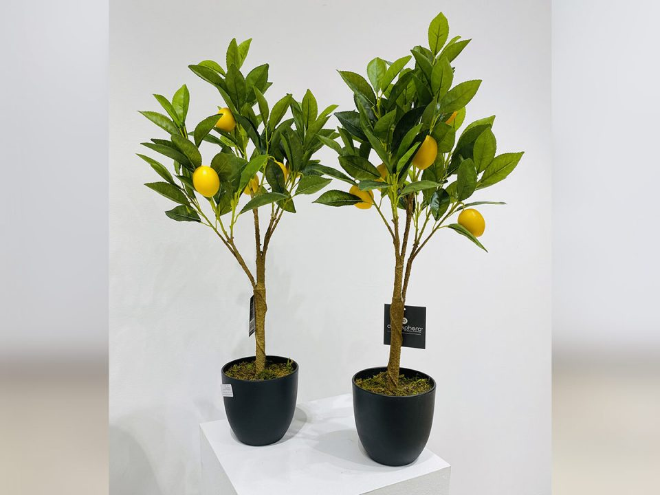 Plante_30